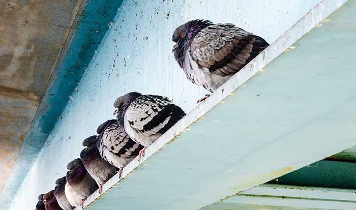 Know the Laws: Bridge Work and Disturbing Nesting Birds